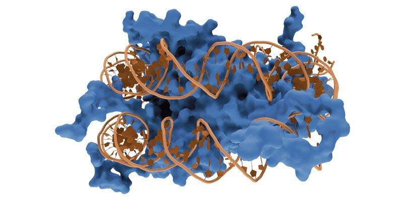 1467890322_Nucleosome1