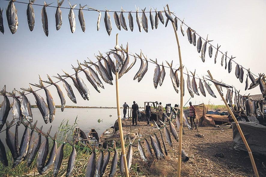 Kalasaalis Valkoisella Niilillä Etelä-Sudanissa.