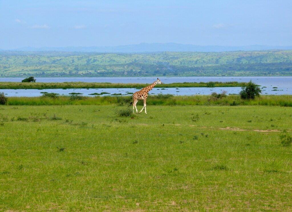 Öljy-yhtiöt Afrikan luonnonpuistojen kimpussa